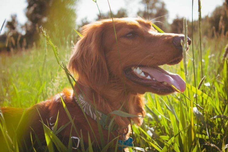 Preparar tu escapada rural con mascota en Cabañas con Encanto