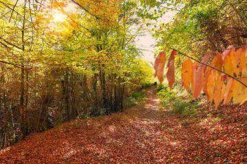 Hayedo en otoño