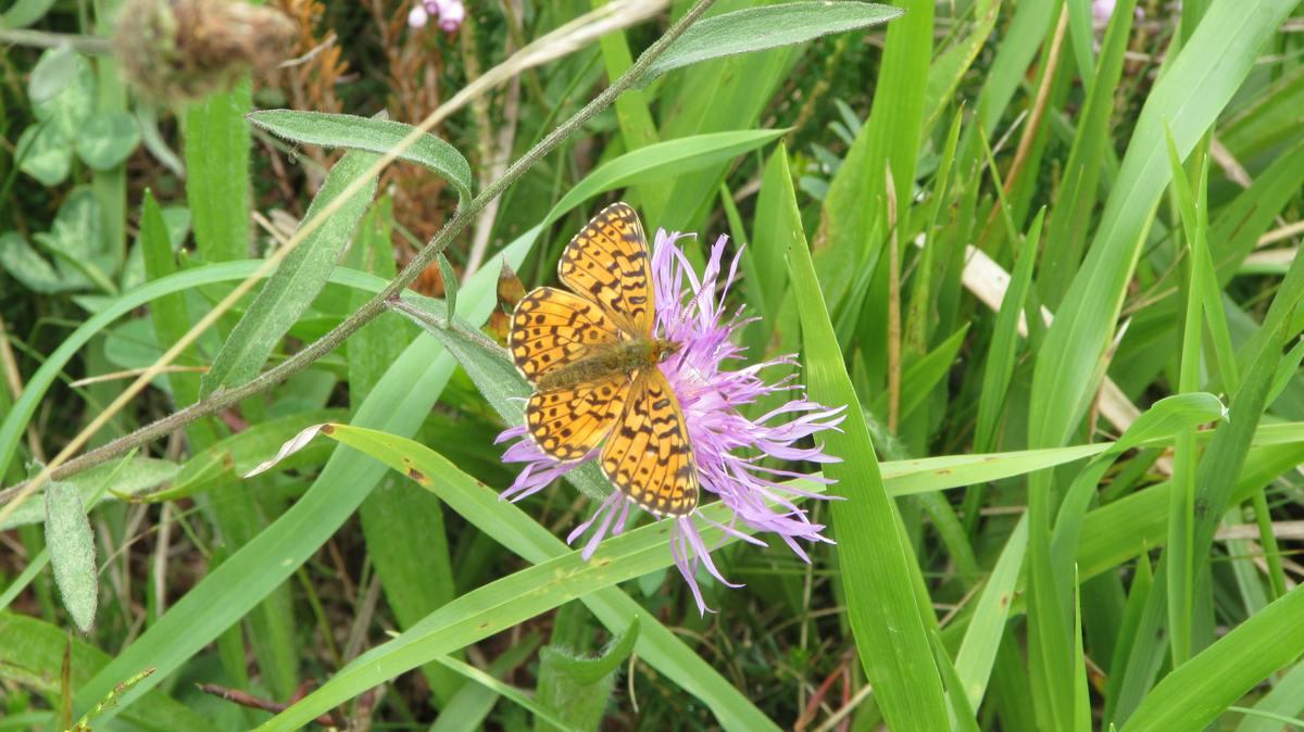 En los valles pasiegos se pueden encontrar todo tipo de especies animales e insectos