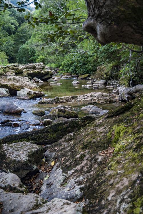 El río Miera a su paso por Liérganes - baños de bosque