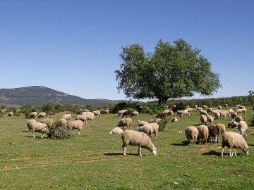 Ruta de senderismo en Sierra de Caballar